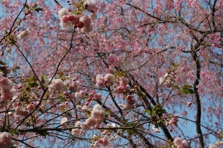 Japon avril 2007
